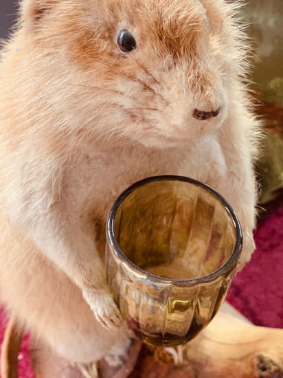 An infant squirrel drinking milk from a glass cup