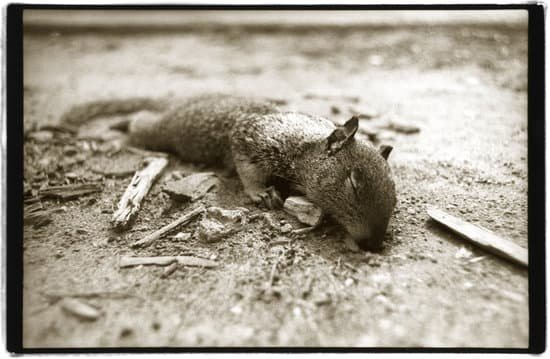a squirrel that is dead for a couple of days may have parasites