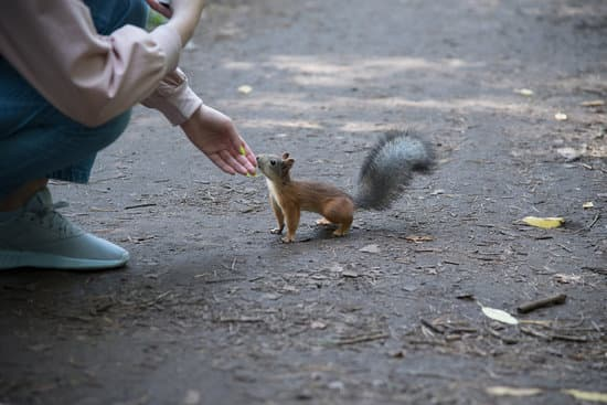 Don't try to touch wild squirrels