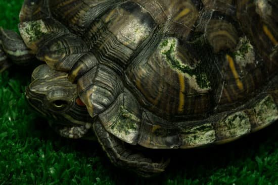 How To Tell If Your Tortoise Is Sick?