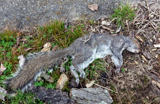 do squirrels bury their dead, no it's usually eaten up