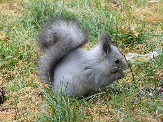 Do squirrels change color?