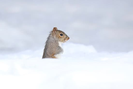 How Do Squirrels Survive In The Winter