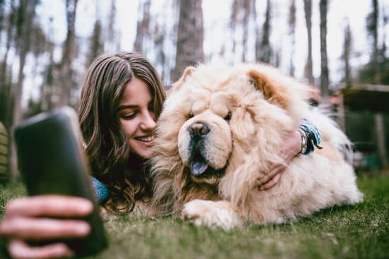How to Get Your Chow Chow More Exciting?