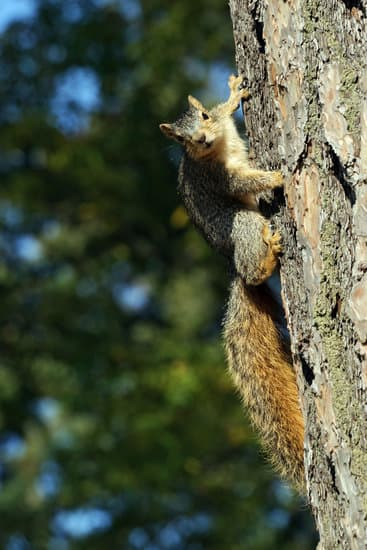 What Sounds Do Squirrels Make?