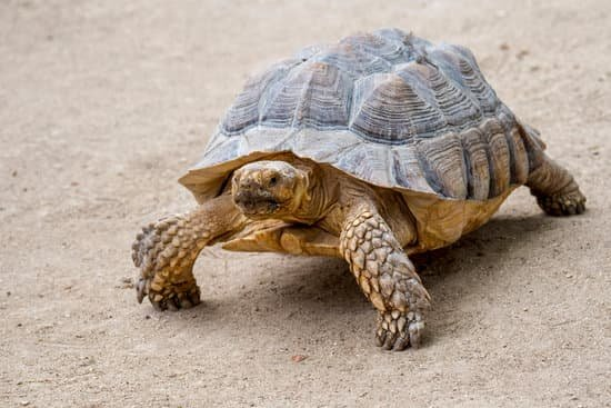 Protein Sources Of Tortoises In The Wild