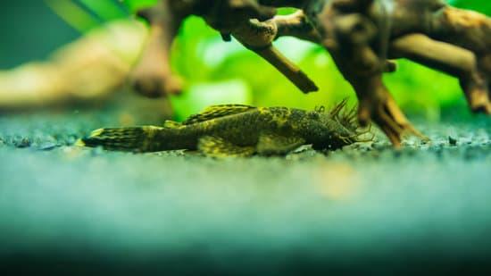 freshwater fish abnormal behaviors