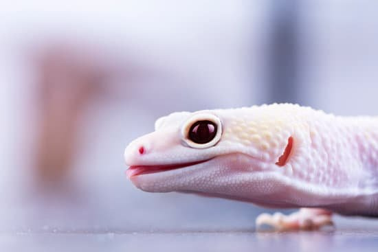 leopard gecko teeths are small