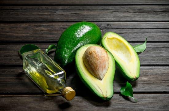 Benefits of Avocado To Pugs