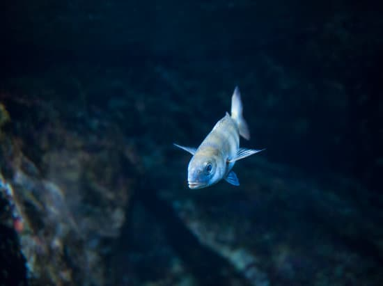 signs of a happy and healthy freshwater fish