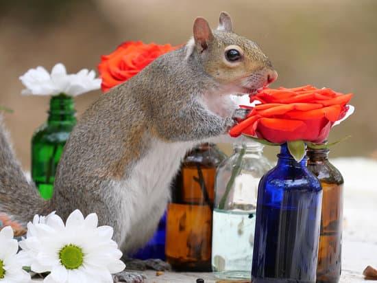 Remove Squirrel Smell