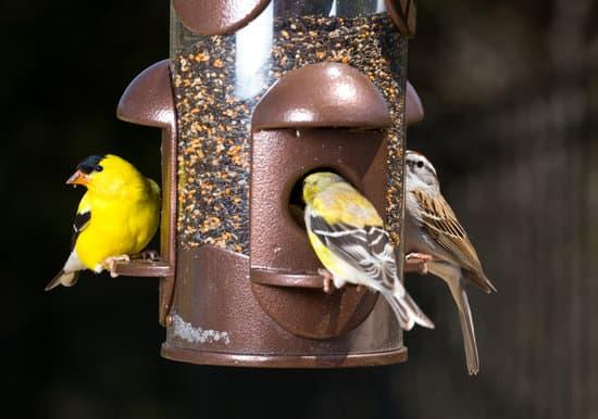 keeping squirrels away from bird's feeder.