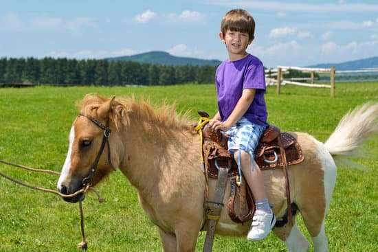 Pony Of The Americas breed of small horse for riding