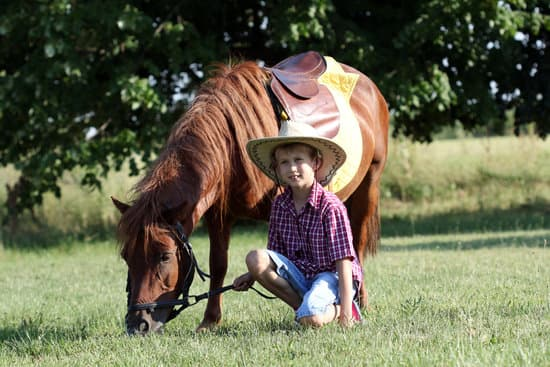 One year of a horse's life is equal to 15 years for a human.