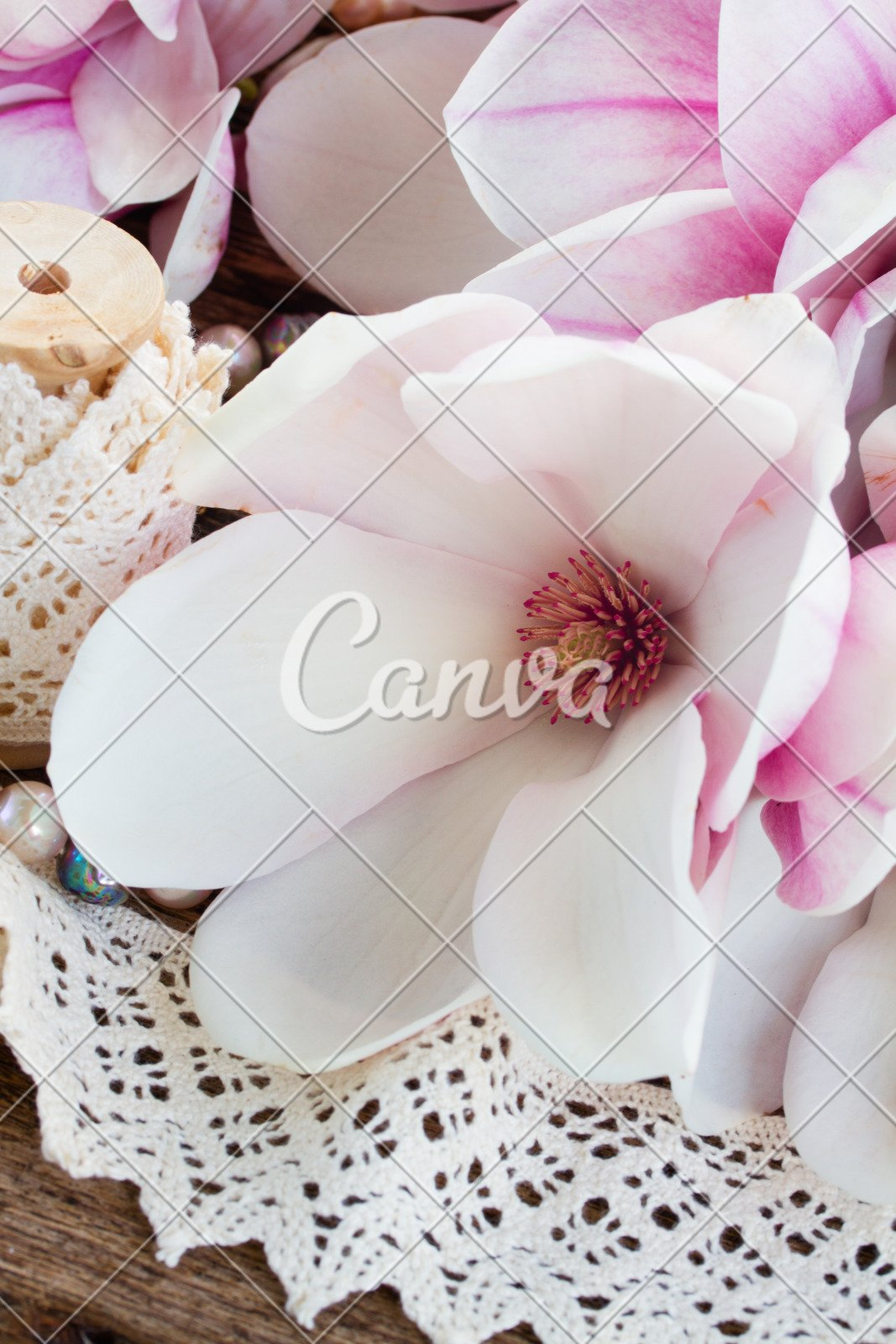 Magnolia Flowers With Pearls Photos By Canva