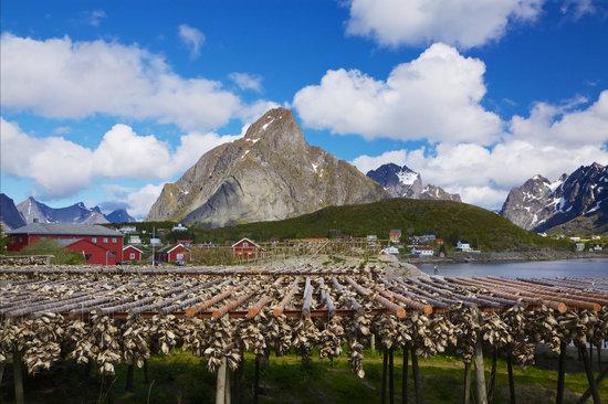 Stock Fish in Norway
