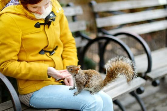 Yes, squirrels can be good to humans if they don't see you as a threat.