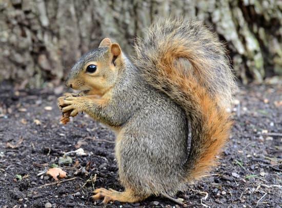 Do Squirrels Like Peanuts?