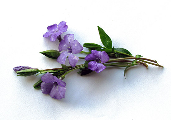 Flowers, Bouquet, Periwinkle, Spring