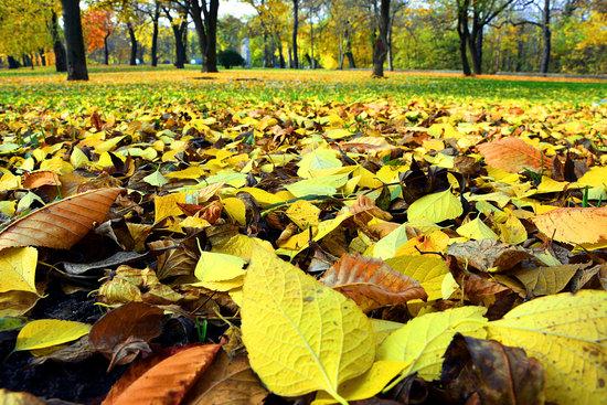 Autumn, Leaves, Nature, Seasons
