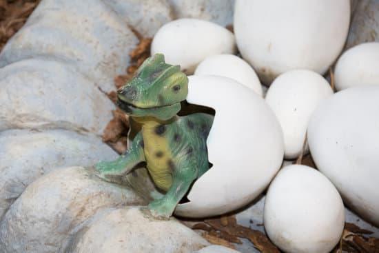 Dinosaur Reptile eggs
