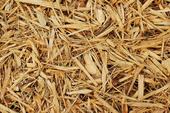 cypress mulch substrate for baby sulcata tortoises