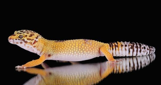 Are Leopard Geckos Good Pets?