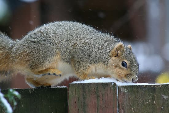 Where Do Squirrels Sleep At Night In The Winter?