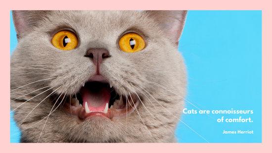 Pink Cat Cute OMG Furry Kitty Desktop Wallpaper