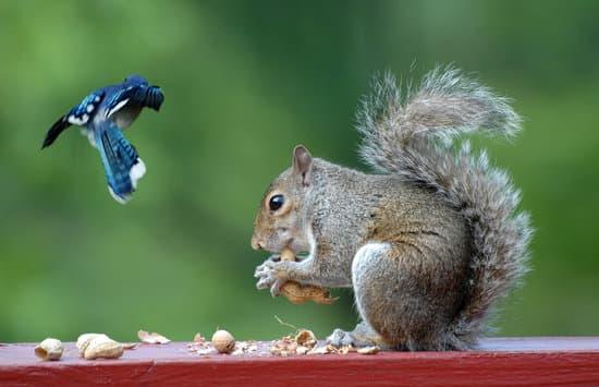 a bird preys on squirrel