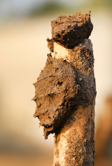 Dried Cow Dung