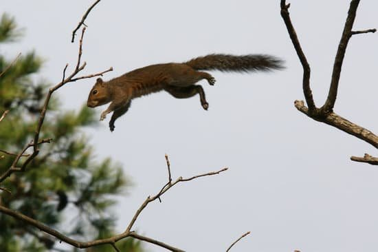 do squirrels die from falling