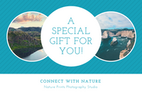 Teal Striped Nature Photography Gift Certificate