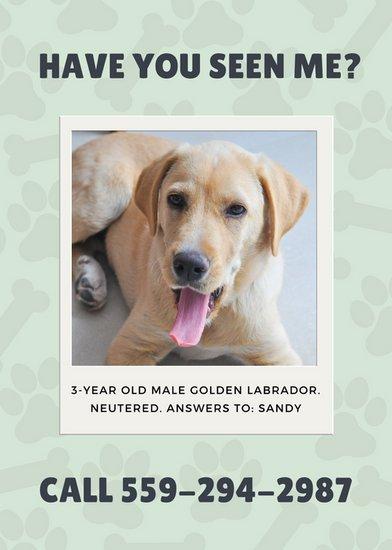 Pale Green Polaroid Frame Lost Dog Flyer  Templates By Canva