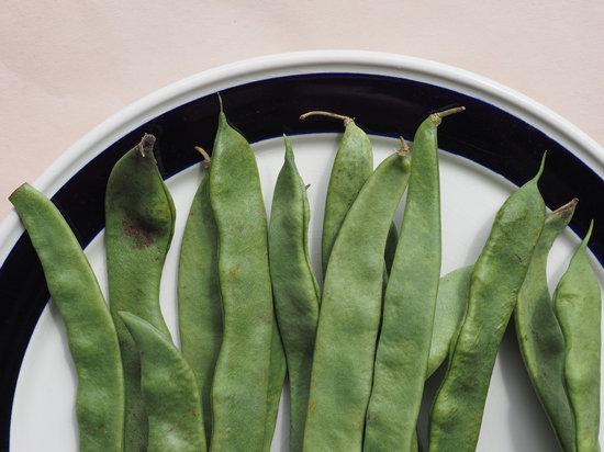 Mangetout Pea