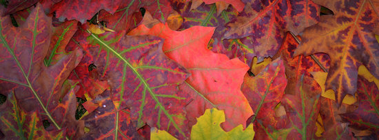 Autumn, Colors, Leaves, Season