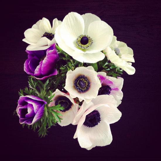 Flowers, Fresh Flower, Bouquet, Petals, Flowering