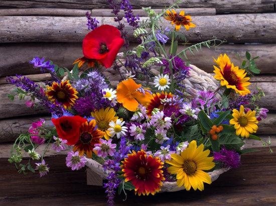 Still Life, Flowers, Bouquet