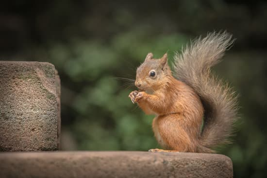 The squirrel's tail helps it to maintain balance and stay afloat in water