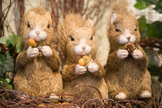 Squirrels love to eat acorns