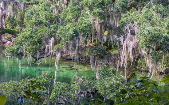 Beauty of Florida