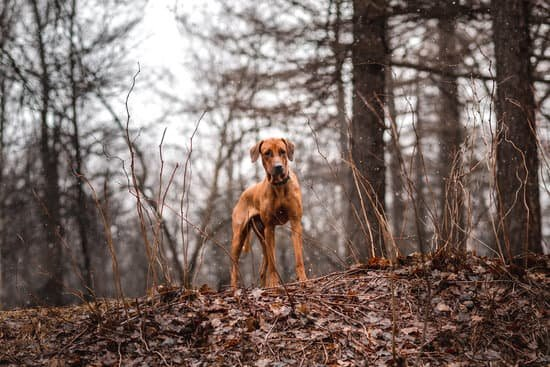 dog easily find squirrel when exploring