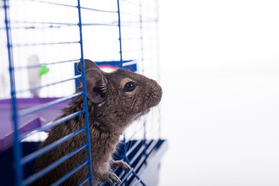 How To Help Prevent Sickness In Squirrel?