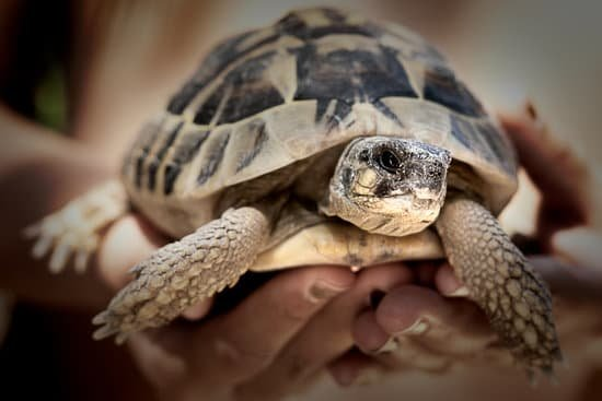 Can You Treat A Sick Tortoise?