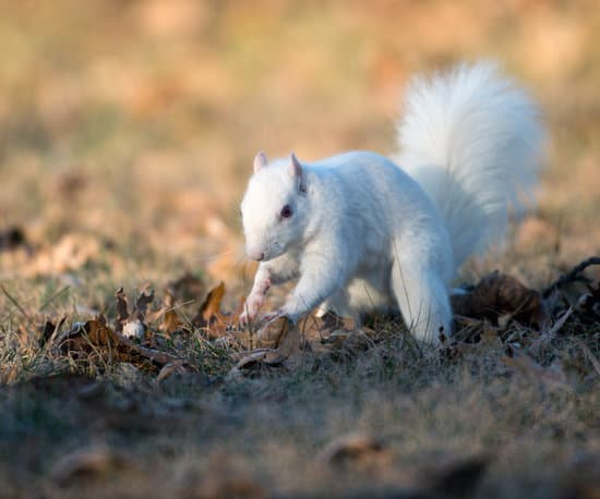 why do squirrels bury nuts is because of scarcity during winter