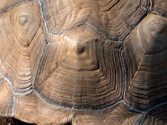 Telling sulcata age by its rings