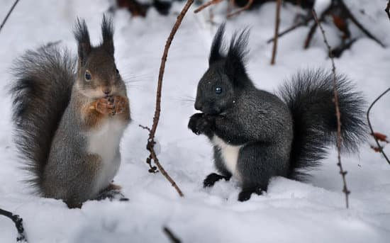 Do Squirrels Stay Together As A Family?