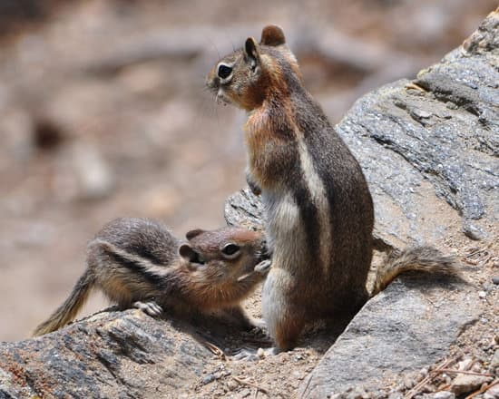 do squirrels breastfeed? yes they do