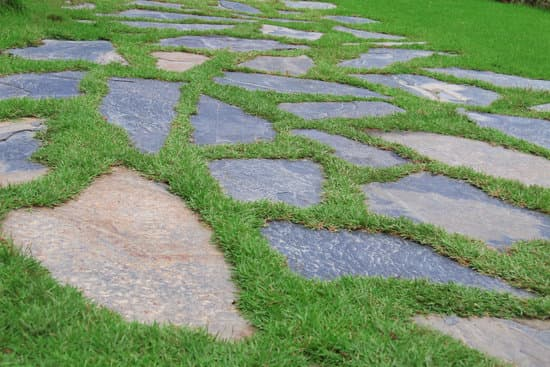 The Best Way to Cover Mud in the Backyard - Green Lawn Cares