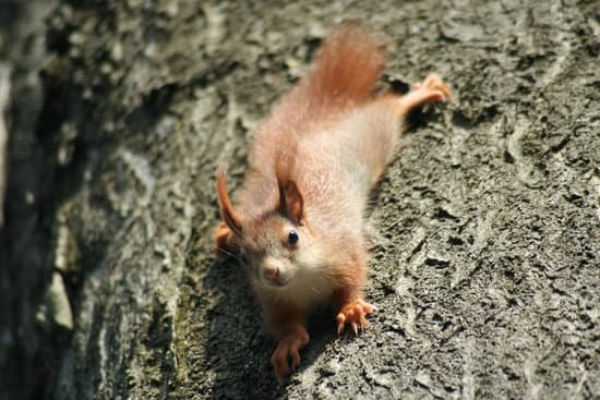 What Do Squirrels Eat In The Wild?